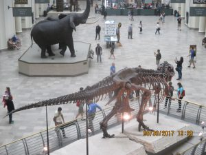 """Inside Chicago's: """"Field Museum of Natural History"""" IMG_6617IMG_6649IMG_6749IMG_67"""